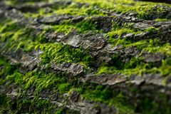 Grünes Moos auf einem Baum Stockfotografie