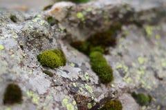 Grünes Moos auf einem grauen Stein Beschaffenheit in der Natur Grünes Blatt mit einem großen Wassertropfen stockbilder