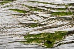 Grünes Moos auf hölzerner Beschaffenheit Stockbilder