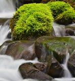 Grünes Moos auf nassen Felsen Lizenzfreies Stockfoto