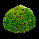 Grünes Moos auf schwarzem Hintergrund Stockfoto
