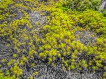 Grünes Moos auf Schwarzweiss-Hintergrund stockfotos