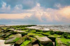 Grünes Moos auf Steinanlegestelle auf Strand Stockfoto