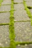Grünes Moos auf Ziegelsteinbahn Stockfoto