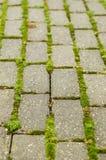 Grünes Moos auf Ziegelsteinbahn Stockbild
