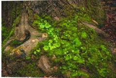 Grünes Moos, das auf Baum wächst stockfotos