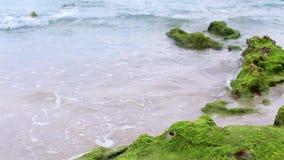 Grünes Moos, das auf Seefelsen mit der Welle des Meerwassers herauf den Strand wächst stock footage