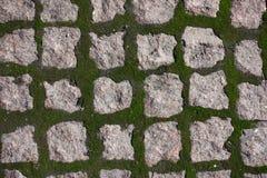 Grünes Moos, das in den Gelenken zwischen der Pflasterung von Blöcken wächst stockfotos