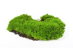 Grünes Moos getrennt auf weißem Hintergrund Stockfotos