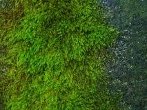 Grünes Moos kontrastiert zur grauen Steinoberfläche Stockfotos