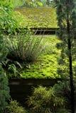 Grünes Moos und Anlage werden auf dem Dach bedeckt Stockfotos