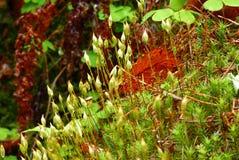 Grünes Moos und Blattnahaufnahme im Wald am regnerischen Tag Stockbild