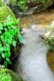 Grünes Moos und Wasserfall im tiefen Wald an Sarika-Wasserfall thailändisch Stockbild