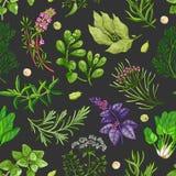 Grünes Muster des Vektors mit Kräutern auf Dunkelheit Lizenzfreies Stockbild