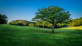 Grünes n-Blau an Singring-Park stockbilder