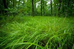 Grünes nasses Gras in einem Wald Lizenzfreie Stockbilder
