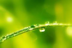 Grünes nasses Gras mit Tau auf Blätter. Flacher DOF Stockfotografie