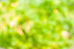 Grünes natürliches verwischt Lizenzfreie Stockfotografie