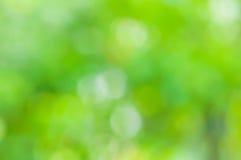 Grünes natürliches verwischt Stockfoto