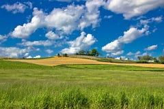 Grünes Natur sceenery unter blauem Himmel Lizenzfreie Stockfotos