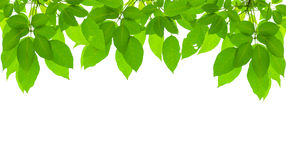 Grünes neues Blattfeld stockfotos