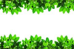 Grünes neues Blattfeld stockfotografie