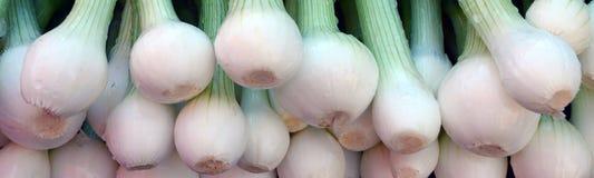 Grünes onions Stockfotografie