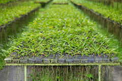 Grünes Orchideenblatt Lizenzfreies Stockbild