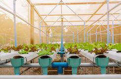 Grünes organisches Salatwasserkulturgemüse im Bauernhof, Thailand Lizenzfreie Stockfotografie