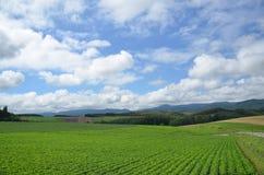 Grünes Paddelfeld, Biei, Japan Lizenzfreie Stockbilder