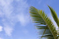 Grünes Palmblatt über blauem Himmel Minimales Foto der tropischen Natur für Hintergrund Lizenzfreie Stockfotos