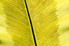 Grünes Palmblatt stockfoto