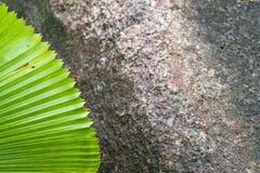 Grünes Palmblatt auf einem Hintergrund des dunklen Steins Stockbild
