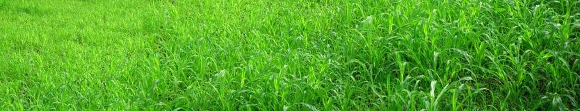 Grünes Panorama Lizenzfreie Stockfotografie
