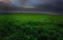 Grünes Paradies Stockbild