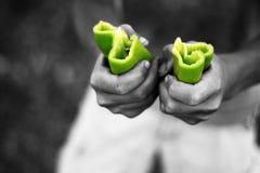 Grünes Pepperoni geteilt Lizenzfreies Stockbild