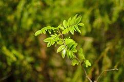 Grünes Pflänzchen Stockfotos