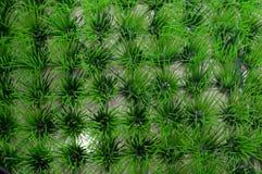 Grünes Plastikgras stockfotos
