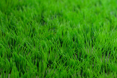 Grünes Plastikgras stockbild