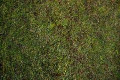 Grünes playard Stockbild