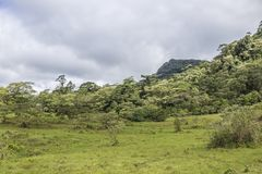 Grünes praire an der natürlichen Reserve Gebirgsmassivs Peñas Blancas, Nicaragua stockfotos