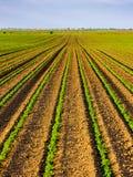 Grünes reifendes Sojabohnenfeld, landwirtschaftliche Landschaft lizenzfreies stockfoto