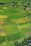 Grünes Reis-Feld lizenzfreies stockbild