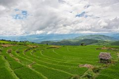 Grünes Reisfeld auf Berg mit Nebel in Chiang Mai Thailand, Ri stockfotos