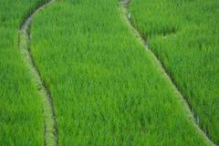 Grünes Reisfeld in Chiang Mai Thailand, Reisfelder an Verbot-PA P Lizenzfreies Stockfoto