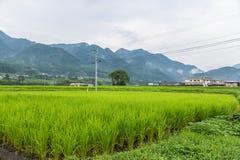 Grünes Reisfeld in ländlichem von Yufuin, Oita, Japan Lizenzfreie Stockfotos