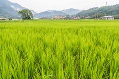 Grünes Reisfeld in ländlichem von Yufuin, Oita, Japan Lizenzfreies Stockfoto