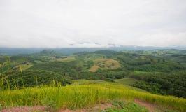 Grünes Reisfeld mit blauem Himmel Lizenzfreie Stockbilder