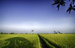 Grünes Reisfeld mit blauem Himmel und sonniger Tag unter dem Baum Lizenzfreies Stockbild