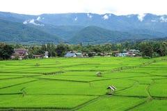Grünes Reisfeld mit grünem Gebirgshintergrund Stockfotos
